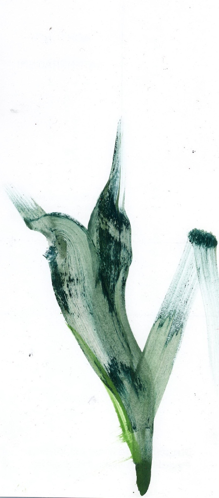 Pflanze idsouiwe