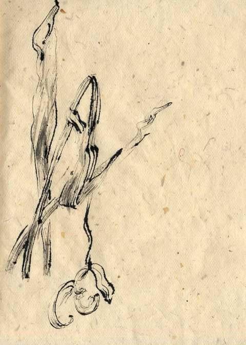 Tulpen qaoisie