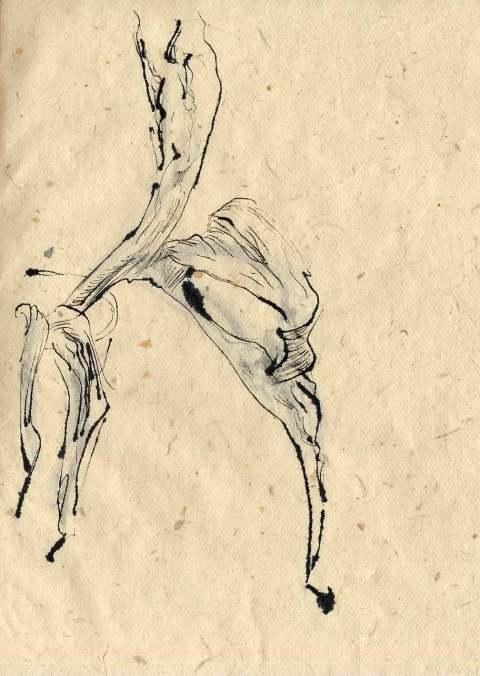 Tulpen sldjkn