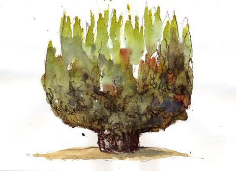 Baum im Botanischen Garten
