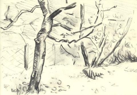 Vogelsberg vdhd