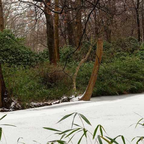 im Tiergarten Jan 2019_2